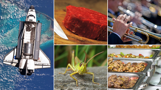 From top left, clockwise: space shuttle, red meat, trumpet players, canteen food, grasshopper. Images by Getty and Thinkstock