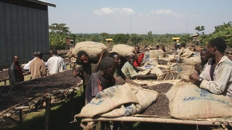 Labourers carry bagged green coffee beans to a cooperative's warehouse for transport to Addis Ababa. Photo James Jeffrey.