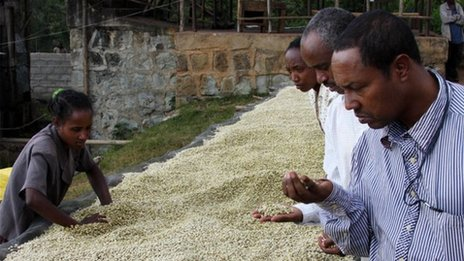 Sidama Coffee Farmers Cooperative Union's Tsegaye Anebo checks green coffee beans at a cooperative's washing station