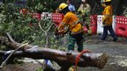 Firemen try to clear up a fallen tree caused by Typhoon Vicente in Hong Kong, 24 July 2012