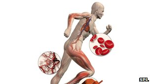 Human body doping impacts