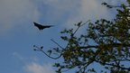 Bat silhouette in Comoros