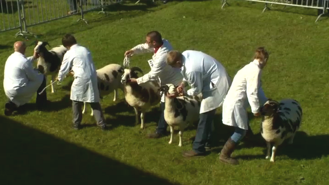 Contestants at Royal Welsh Show