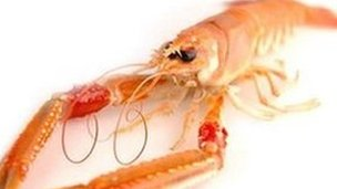 Scottish langoustine. Pic: Supplied by Mallaig and Northwest Fishermen&#039;s Association