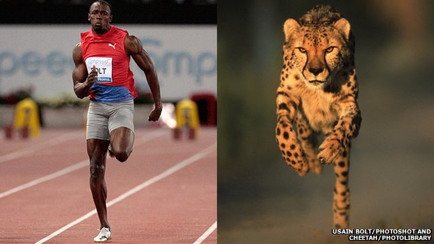 Usain Bolt and a cheetah