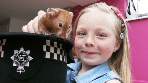Rolo the hamster
