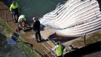 Council workers remove a handrail as they prepare to remove a dead 30-tonne humpback whale in the Newport Beach rock pool north of Sydney on 1 August, 2012