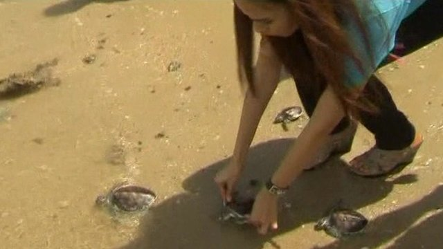 A girl releases a turtle