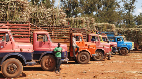 Kakira sugar cane plantation