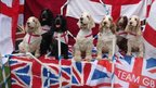 Dogs sitting on a union jack flag. Photo: Rachel Appleby