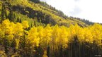 Aspen colony, known as Pando (Image courtesy of Hans Wobbe)