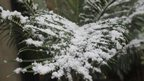 Fern covered in snow, Johannesburg, South Africa - 7 August 2012