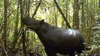 A Sumatran rhino roams at Gunung Leuser National Park