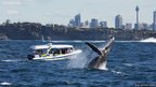 Spectators in a boat watch a humpback whale in the ocean