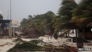 A resident walks past swaying palm trees following the passing of Hurricane Ernesto in Mahahual, in the Mexican state of Quintana Roo, 8 August 2012