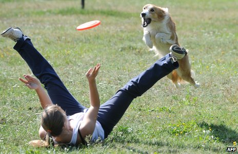 Dog frisbee training - file pic