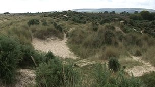 Studland sand dunes