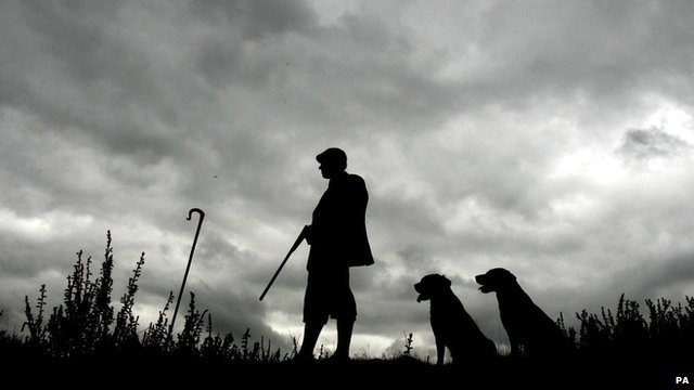 A gamekeeper and dogs during grouse season