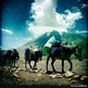 Horses carry packs in Upper Mustang (Photo by Tom Van Cakenberghe, 2012)