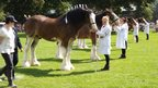 Horses ready for inspection at an agricultural show