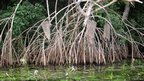 Mangrove forest and shrimp traps (c) L Keith / WCS