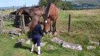 A girl feeding some horses