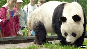 Bao Bao, male giant panda who has died at Berlin zoo, pictured in 2000