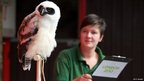 An owl sits on his perch while a zoo keeper makes notes in the background.