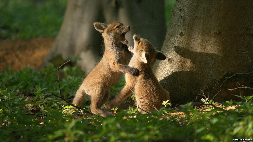 wildlife photography pdf free download