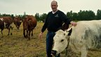 Ingulf Galaen with his local breed of Roros cows.