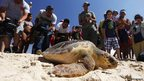People watch as a loggerhead sea turtle is released back into the Mediterranean Sea