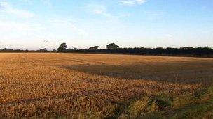 Farmland in St Osyth