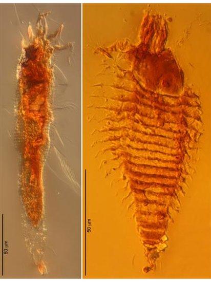 Ancient mites