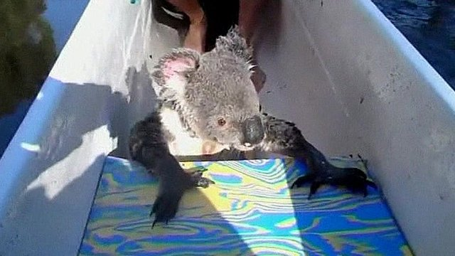 The koala in the canoe