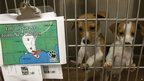 Puppies at a shelter in Houston, Louisiana
