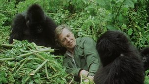 Sir David Attenborough meets a gorilla family