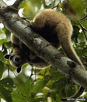 Anteater in Costa Rica