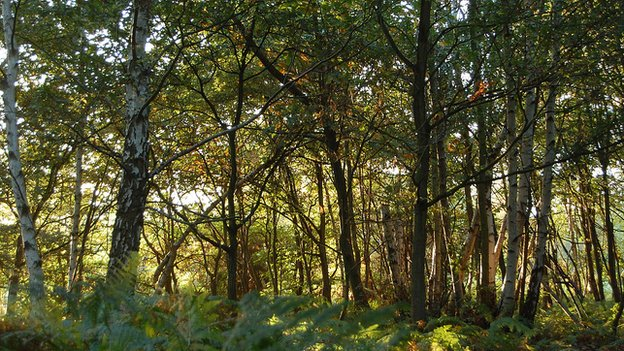 Woodland; Buckinghamshire, UK (Image: BBC)