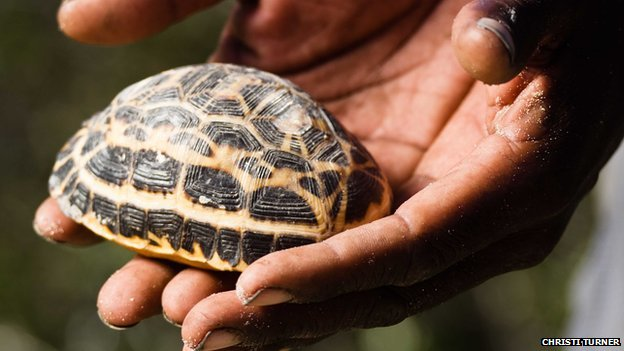 Holding a spider tortoise