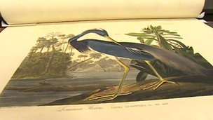 Audubon&#039;s Birds of America