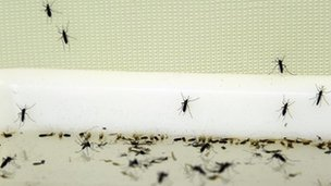 Death Prompts Greece dengue fever scare _62677827_flye390a