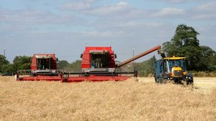 Combine harvester working in the fields