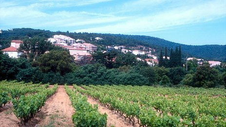 Vineyards near St Tropez