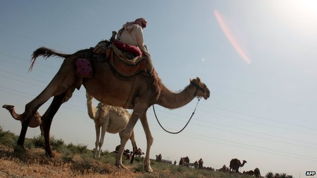 Desert shepherd on his camel