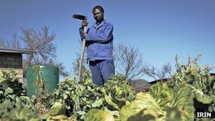 Man in his vegetable garden