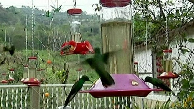 Hummingbirds at the Enchanted Garden