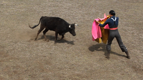 Bullfighting practice at Rancho Seco