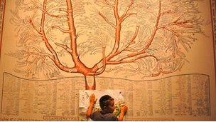 A religious youngster takes notes in front of a large tree diagram showing the derivation of the various Hasidic courts