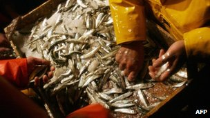 Crew members of the fishing trawler Diego David sort the catch of sardines and anchovies off the coast of Vigo (file image from December 2005)