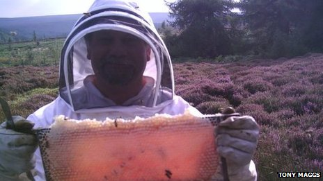 Bee-farmer holds up a frame of honey on a heather moor
